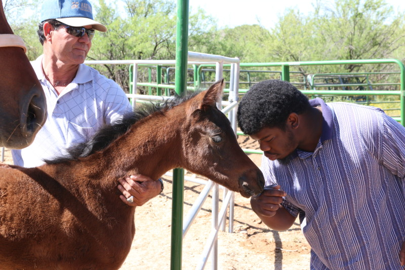 Student touching a month old foal